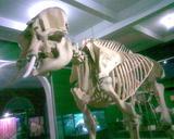 Museo Argentino de Ciencias Naturales - Fotos